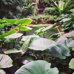 Nature in the big city Water Lilies :green_heart:#flowers #lillies #bangkok #thailand #jimthompson #lush #lovethis #bangkok #thailand #travel #travelling #travellingwithkids #journey #happydays #bairns #kids #notdeadyet #koopslife #southeastasia #asia #backpacking #travelbug #globalcitizen #worldcitizen #lovetravel #lovetravelling