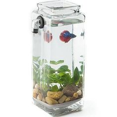 1000 images about for the fishies on pinterest betta for How to clean a fish tank without killing the fish