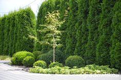 "Jak ""ożywić"" mój szmaragdowy ogród - strona 1193 - Forum ogrodnicze… Garden Design, Country Roads, Gardening, Lawn And Garden, Landscape Designs, Horticulture, Yard Design"