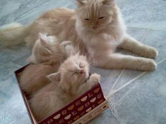Proud mama shows her munchkins the wonders of cardboard.