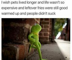 nice 49 Out Of Limit Funny Memes That Guarantees You Laughter
