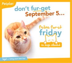 Every dog has its day, but every first friday of the month, our office is going to the cats - literally! Petplan is purr-oud to introduce Feline Fur-st Friday, a day reserved exclusively for our kitty coworkers to roam the office without any doggy distractions!   If you're a pet-friendly company, we challenge you to take the Feline Friday challenge and do the same!