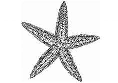 """Starfish tattoo with """"it makes a difference"""""""