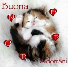 Buona notte God Bless You, Italian Memes, Dolce, Good Night, Animals And Pets, Blessings, Snoopy, Kittens, Bonjour
