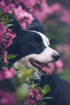 #Dog, #Flowers, #Animals