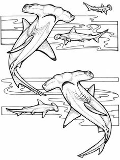 Shark Adult Coloring Pages Unique Hammerhead Shark Coloring Page Ocean Coloring Pages, Animal Coloring Pages, Coloring Pages For Kids, Coloring Sheets, Kids Coloring, Hammerhead Shark Tattoo, Hai Tattoos, Shark Drawing, Leopard Shark
