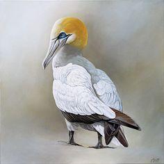 Gannet Gl,ow by Craig Platt Bird Artists, Nz Art, Bird Paintings, Bird Drawings, Sea Birds, Wildlife Art, Beautiful Birds, Painting & Drawing, Sketching