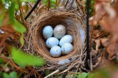 """""""The back screen door of spring is slamming behind us, but there are still little babies being born (aside from those pesky bugs),"""" says gardening writer Amy Renea. """"Save the pruning until all little eggs have hatched and the birdies are flying free."""""""