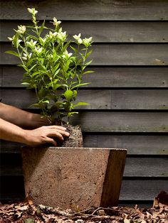 How to Build a Rock-Solid Concrete Planter - With basic carpentry tools, a wheelbarrow, and some tinted concrete, you can build this sturdy home for houseplants.