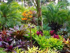 Gallery | Bromeliads NZ Tropical Garden, Tropical Landscaping, Bromeliads, Tropical Garden Design, Beautiful Flowers Garden, Tropical Backyard, Small Garden Landscape, Beautiful Gardens, Bali Garden