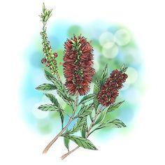 Bottlebrush Flower Digi Stamp in Digital images