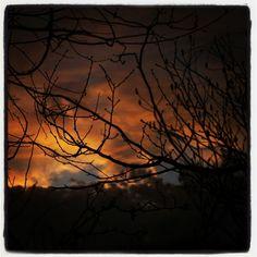 sunset throw the trees of my backyard.