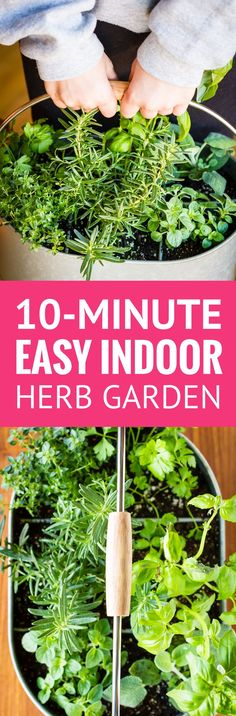 Easy Indoor Herb Garden -- I was an indoor container gardening failure, until I decided a different approach was in order. Find out how you can create this simple DIY indoor herb garden in under 10 minutes! | diy indoor herb garden | indoor herb garden ideas | indoor herb garden for beginners | indoor herb garden containers | find the tutorial on unsophisticook.com #herbgarden #indoorplants #containergardening #herbs #unsophisticook