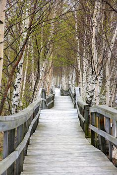Sackville Marsh Boardwalk, Sackville, New Brunswick, Canada East Coast Travel, East Coast Road Trip, East Coast Canada, New Brunswick Canada, Atlantic Canada, Win A Trip, Travel Goals, Countries Of The World, Beautiful Places
