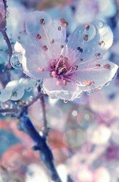 flower child — translucent flower