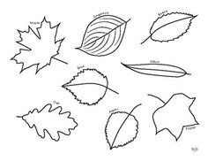 Color 8 common North American leaves and become familiar with their shapes - from Our Time to Learn. Leaf Coloring Page, Coloring Pages, Science Worksheets, Hair Accessories, Leaves, Creative, Quote Coloring Pages, Printable Coloring Pages, Kids Coloring