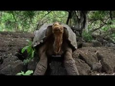 David Attenborough's Galapagos    David Attenborough's Galapagos Episode...