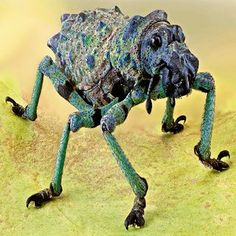 This weevil (Holonychus violaceus) is part of the massive order Coleoptera, which contains nearly a quarter of all known animal life forms.