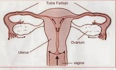 gambar kista ovarium