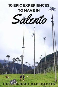 With post-card like views, incredible hikes and the world's tallest palm trees, here's all the things you need to do in Salento Colombia // Cocora Valley / salento travel / best things to do in Salento / what to do in Salento / travel salento / Salento Colombia things to do / Salento Colombia pines / Colombia travel / Salento travel