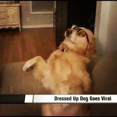 Made the Local News! | Bailey the Golden Retriever