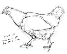 Today we will learn to draw a hen. More useful than a hen could be only a guinea pig or platypus. A hen is not only valuable meat and eggs, but also regular filling Bird Drawings, Animal Drawings, Pencil Drawings, Chicken Drawing, Chicken Art, Rooster Painting, Mural Painting, Pencil Drawing Inspiration, Animal Doodles