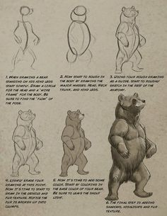 Art tutorials for all — anatoref: Bear by Aaron Blaise Anatomy Sketches, Drawing Sketches, Drawing Artist, Animal Sketches, Animal Drawings, Urso Bear, Bear Sketch, Bear Character, Character Design