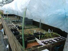 Heated Propagators | Garden World Discussions