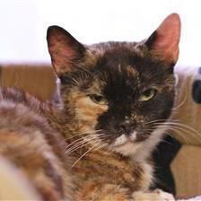 8 17 16. Gracie - Cat Rehoming & Adoption - Wood Green Animals Charity