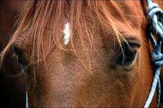 Un cheval mort sous les coups de son maître ? Une autopsie est en cours...  :'( sniff :'( sniff BOURREAU :'( ASSASSIN :'( SAUVAGE :'( CONNARD :'( POURRI :'( DEBILE :'( sniff :'( sniff  AMORE  Cetee homme est indigne du titre de cavalier, c'est juste un sombre crétin !! Il faut qu'il soit interdit de compétiton a vie si il es vrai que son cheval est mort d'épuisement.