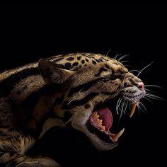 Big Cats, Vincent J. Musi