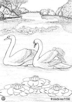 Coloring for adults - Kleuren voor volwassenen Bird Coloring Pages, Adult Coloring Pages, Coloring Sheets, Coloring Books, Bird Drawings, Animal Drawings, Easy Drawings, Pencil Shading, Wood Burning Patterns