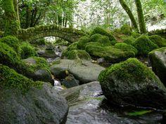 bellasecretgarden: Bridge at Kilfane by IrishFireside on Flickr