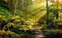 Path Through The Forest Desktop Wallpaper Photos #cc5j0c 1920x1200 px 4.06 MB Nature & Landscape
