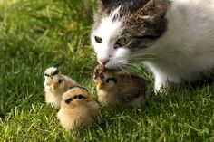 cat and robin- an unlikely friendship. aww :0)