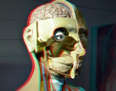 Amazing Models Boerhaave anaglyph  stereo  red/cyan