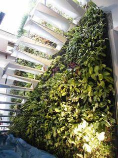 vertical plantscape
