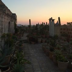 Convento sunsets why did we ever leave #ilconvento