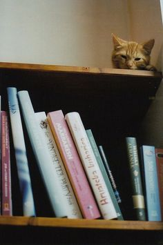 """Books & cats. my two favorite things! CAT: """" Yeah, but I'd like teh see more books on feline status."""""""