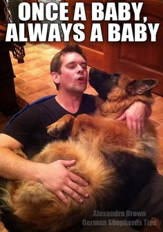 This is totally how my husband treats our two Germans! Thank God for training so they feel like true GSD's!