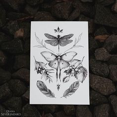 #plants #lunamoth #dragonfly #sketch #artmagazine #artwork #artgalery #worldofartists #art_spotlight #sketch_daily #flowers #drawing #artgalaxies #whichinkilike #art_empire #art_we_inspire #blacktattooart #blackworkers #blxckink #illustration #art #art_assistance #flashaddicted #topcreator