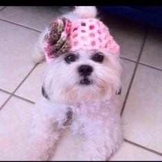 The top model Teacup Maltese, Maltese Puppies, Crochet Hats, My Love, Random, Model, Tops, Fashion, Knitting Hats