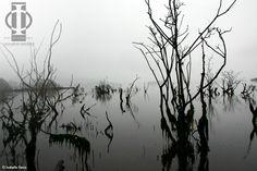 Mangrove - Photo Isabelle Denis