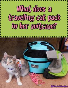 Ever wondered what a cat would pack in her suitcase? Find out Sophie's must-have items on her packing list! #cats #travel #BlogPaws