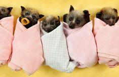 bebés murciélagos. 15 mimoso animales