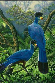 Dois pássaros bonitos na selva. . .