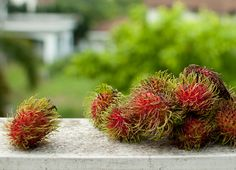 The Ngoh. In English, it's known as a rambutan.