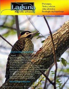 Laguna - revista urbana: Junio 2015