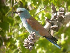 Loja Wildlife, Granada Province, Spain. Bird Watching, Granada, Wild Flowers, Orchids, Spain, Wildlife, Birds, Tours, Animals