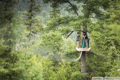 Arbre en arbre - Photo : @matdupuisphoto
